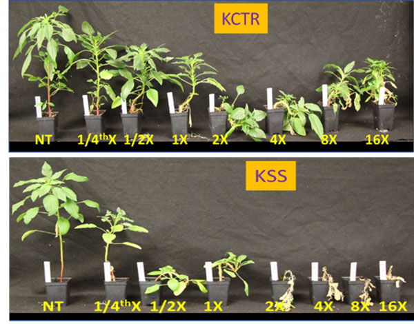 herbicide resistance testing